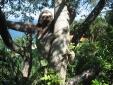 Ilha do Toque Boutique Hotel Natureza